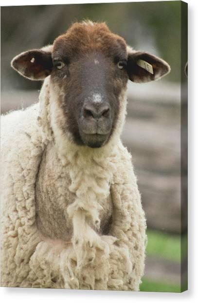Moma Sheep Canvas Print
