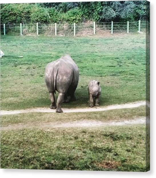Rhinos Canvas Print - Momma And Baby Rhino #new #edition #zoo by Peggy Hoefner