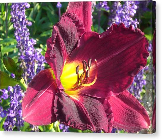 Mom's Lilly Canvas Print by Wendy Robertson