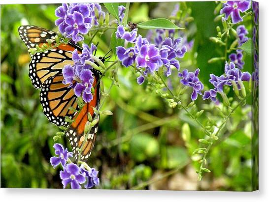 Monarch And Purple Flowers Canvas Print by Rosalie Scanlon