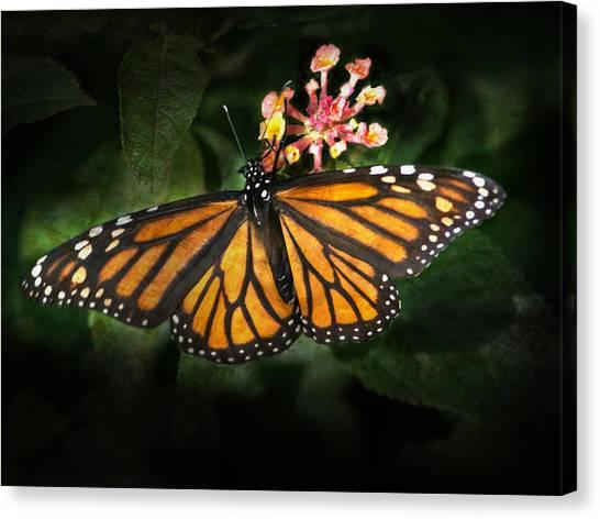 Monarch Butterfly On Lantana Canvas Print