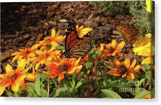 Canvas Print - Monarch Butterflies by Megan Cohen