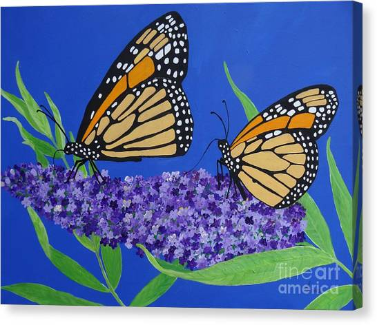Monarch Butterflies On Buddleia Flower Canvas Print