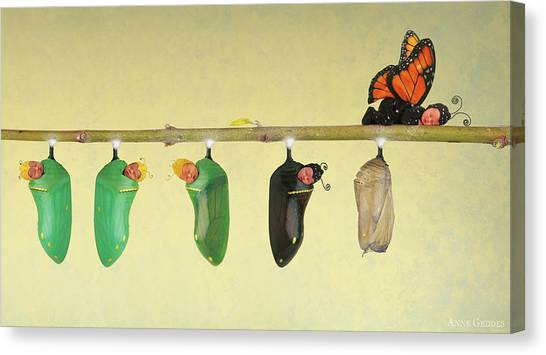 Canvas Print - Monarch Butterfly by Anne Geddes