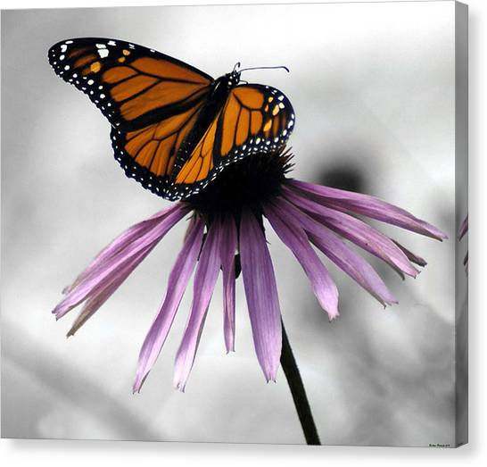 Monarch Butterfly Canvas Print by Evelyn Patrick