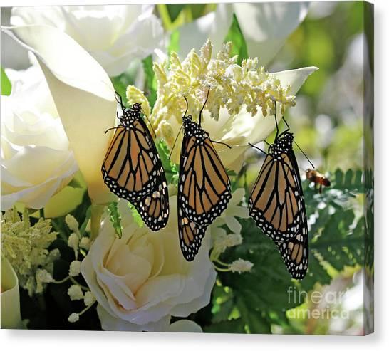 Monarch Butterfly Garden  Canvas Print