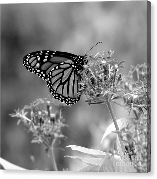 Monarch Butterfly In Bw Canvas Print