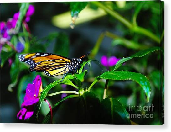Little Things Canvas Print - Monarch Buttefly by Jeff Swan