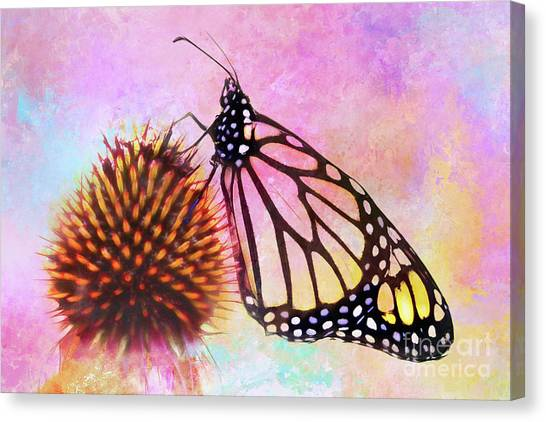 Monarch Butterfly On Coneflower Abstract Canvas Print