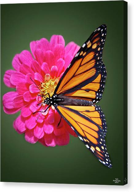 Canvas Print - Monarch Butterfly On Pink Flower by Peg Runyan