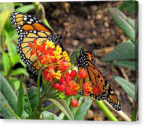 Monarch Handshake Canvas Print
