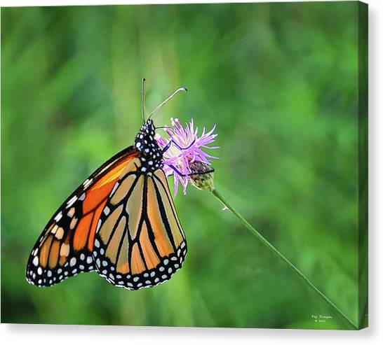 Canvas Print - Monarch In The Meadow by Peg Runyan