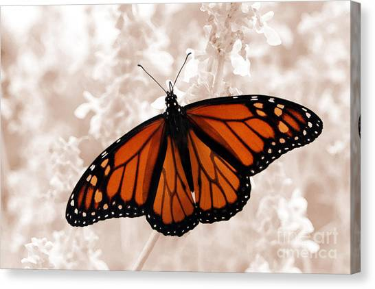 Monarch Canvas Print by Jeannie Burleson