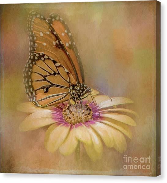 Monarch On A Daisy Mum Canvas Print