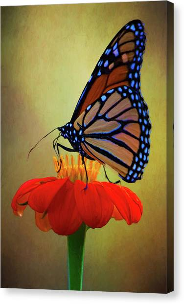 Canvas Print featuring the photograph Monarch On A Mexican Sunflower by Chris Lord
