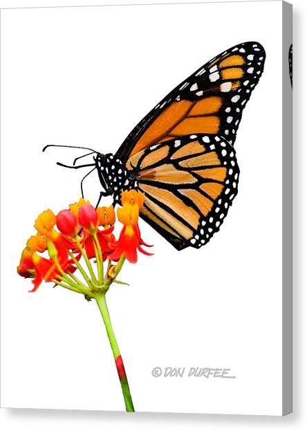 Canvas Print - Monarch On Lantana by Don Durfee