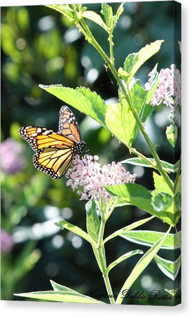 Monarch1 Canvas Print