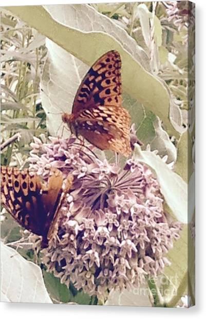 Monarch's On Milkweed Canvas Print