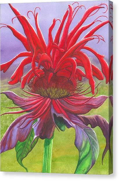 Monarda Canvas Print by Catherine G McElroy