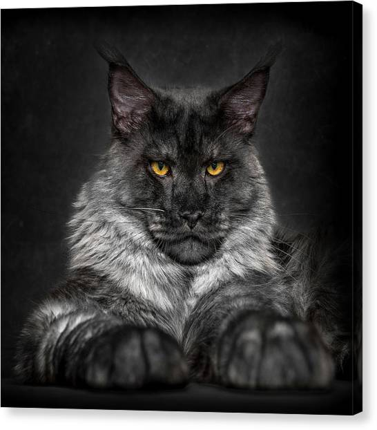 Canvas Print featuring the photograph Monday Face. by Robert Sijka