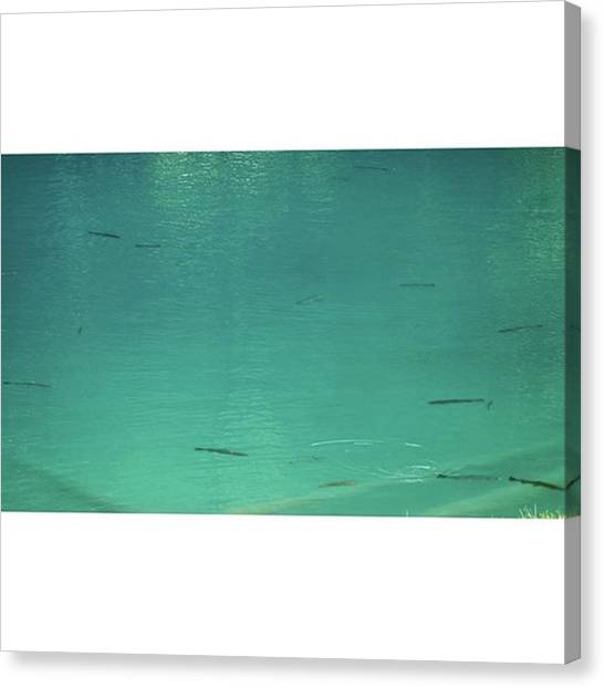 Trout Canvas Print - Monet Style, Part by Celine Biz