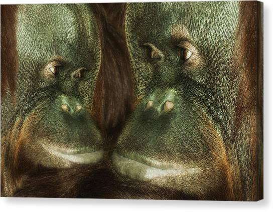 Orangutans Canvas Print - Monkey Love by Jack Zulli