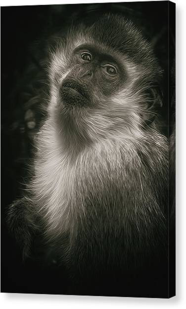 Monkey Portrait Canvas Print