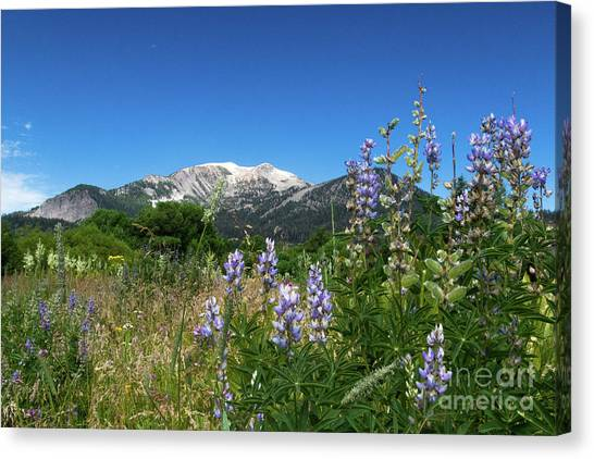 Mammoth Meadow   Canvas Print