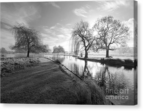 Mono Bushy Park Uk Canvas Print