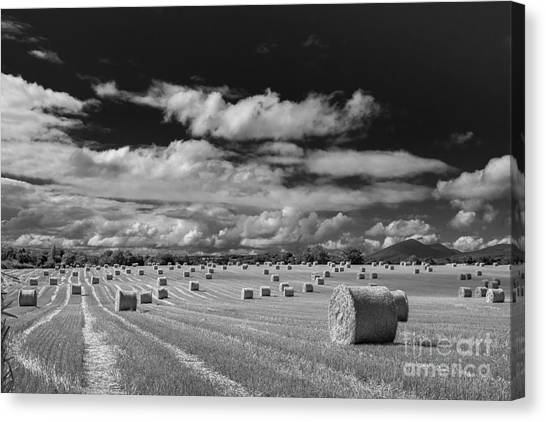 Mono Straw Bales Canvas Print