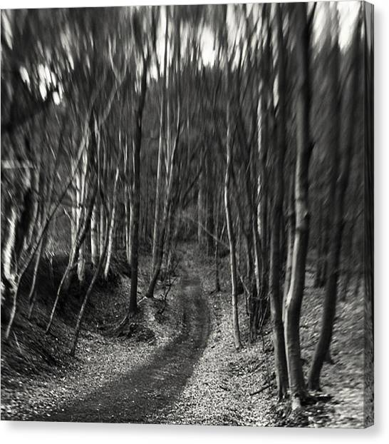 Forest Paths Canvas Print - #monochrome #lensbaby #composerpro by Mandy Tabatt