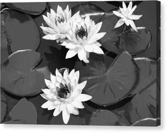 Monochrome Lilies Canvas Print by Milena Ilieva