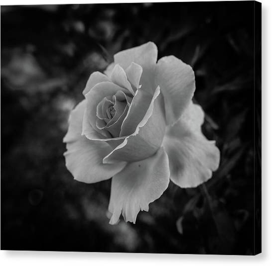 Monochrome Rose Macro Canvas Print