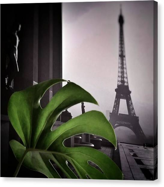 Paris Canvas Print - Monstera Délicieuse #paris #plant by Rafa Rivas