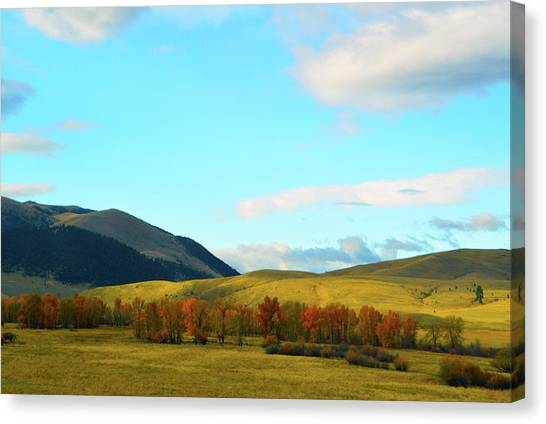 Montana Fall Trees Canvas Print