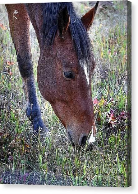 Montana Horse Canvas Print by Diane E Berry