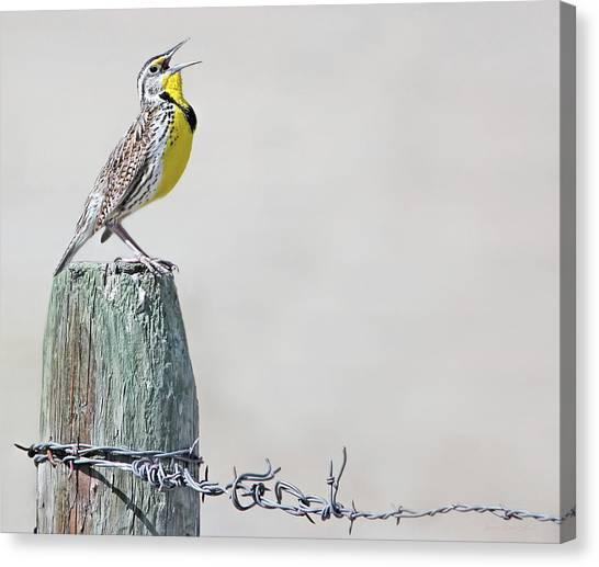 Meadowlarks Canvas Print - Montana Meadowlark's Spring Song by Jennie Marie Schell