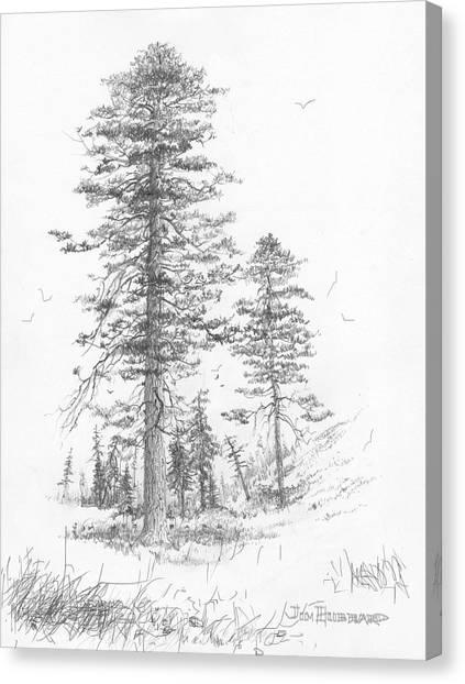 Montana-ponderosa Pine Canvas Print