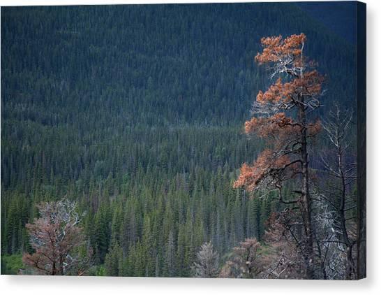 Montana Tree Line Canvas Print