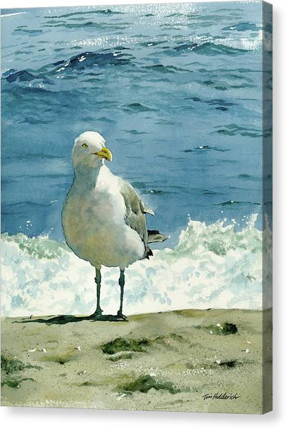 Seagulls Canvas Print - Montauk Gull by Tom Hedderich