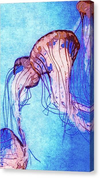 Sightseeing Canvas Print - Monterey Bay Jellyfish by Susan Maxwell Schmidt