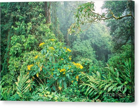 Monteverde Canvas Print - Monteverde Cloud Forest, Costa Rica by Inga Spence