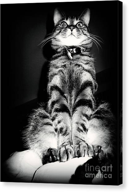 Monty Our Precious Cat Canvas Print