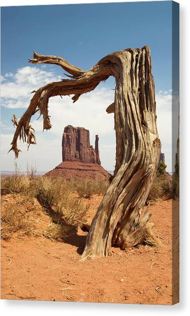 Monument Valley Desert Tree Canvas Print