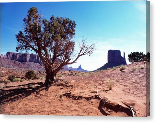 Monument Valley Tree 1 Canvas Print by Kim Lessel