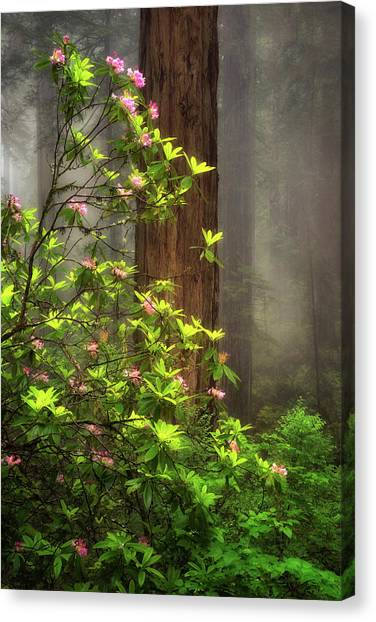 Moody Forest  Canvas Print