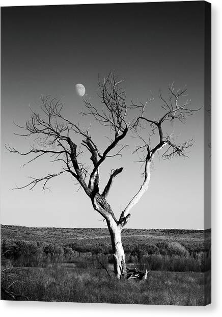 Moon And Memory At Bosque Del Apache N M Canvas Print