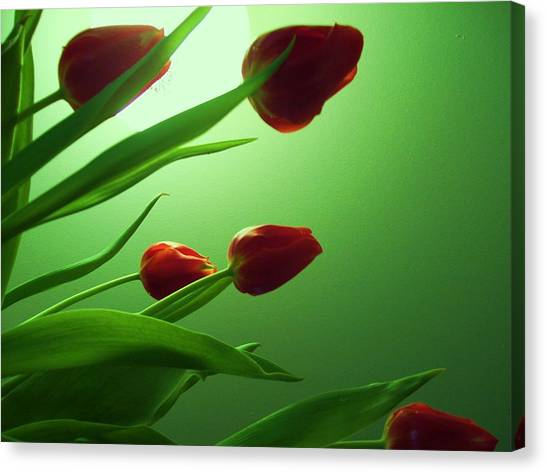 Moon  And Tulips Canvas Print by Nereida Slesarchik Cedeno Wilcoxon
