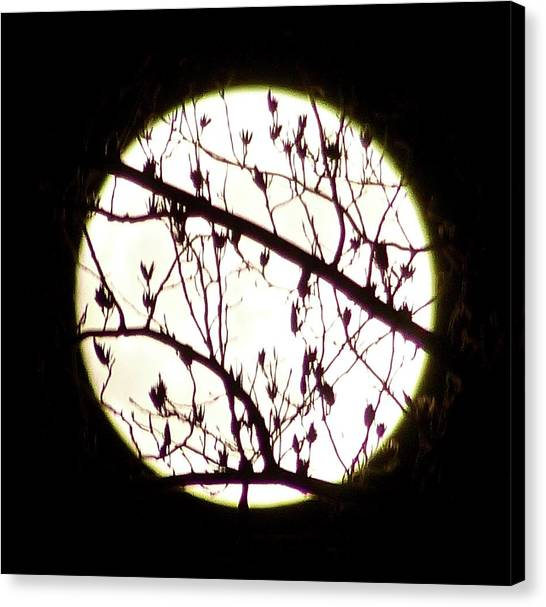 Moon Branches Canvas Print