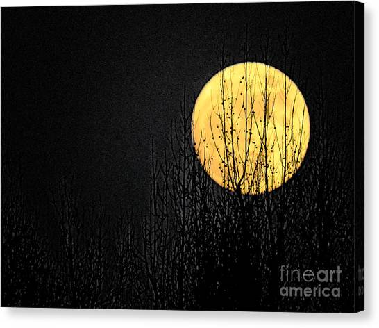 Moon Over The Trees Canvas Print